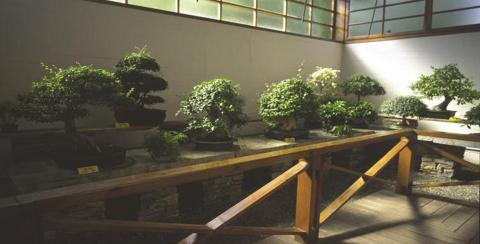 Picture of Bonsai Museum