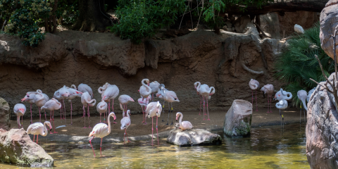 Picture of Bioparc Fuengirola