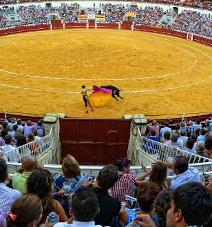 Picture of Bullfighting